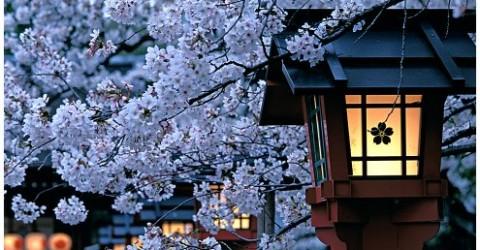 cropped-japan